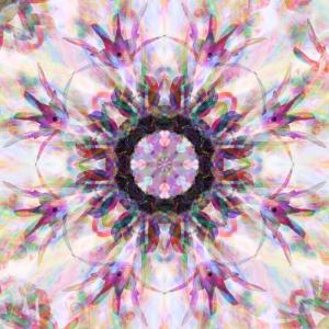 1-bgorchids-10-iii_-12